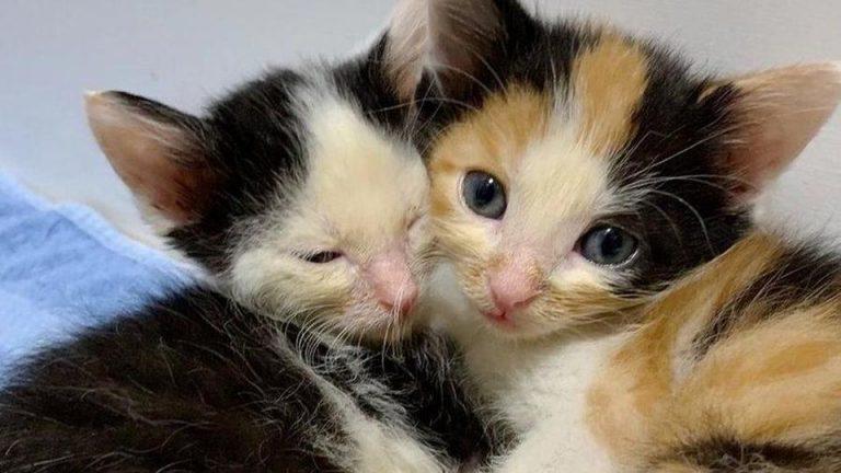 In un video la storia dei tre gattini torturati dalla cattiveria umana e poi…
